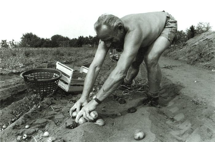 Kartoffelernte. Foto: Erich Weiß