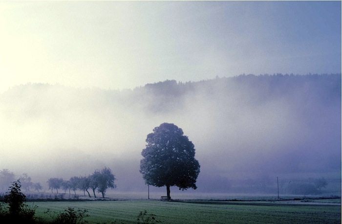 Nebellandschaft. Foto: Monika Schau