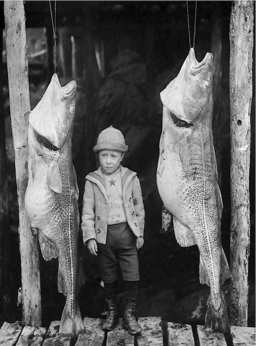 In-Cod-We-Trusted. Foto: The Rooms Provincial Archives, Newfoundland