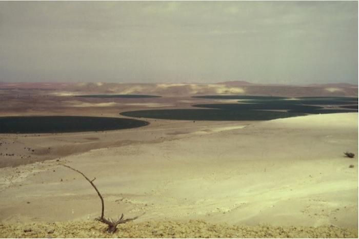 Felder in der Nähe von Riyadh