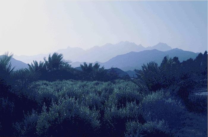 Khatbüsche soweit das Auge reicht. Im Hintergrund das Asir Gebirge