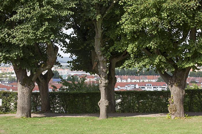Michelsberg Ausblick. Foto: Erich Weiß