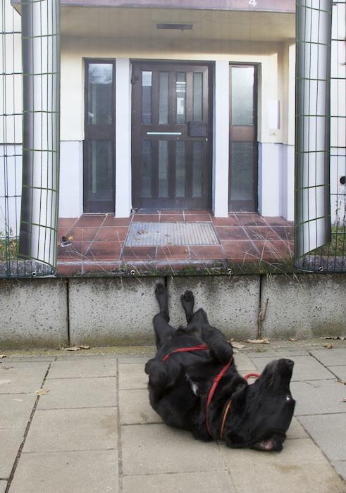 Wotan freut sich schon auf sein neues Zuhause. Foto: Erich Weiß