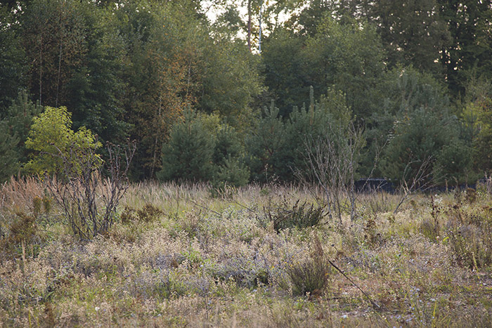 Munagelände an der Geisfelder Str. Foto: Erich Weiß